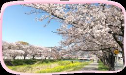 コモンシティ西桜木30号地・31号地(建売)